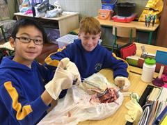 Science in 6th class